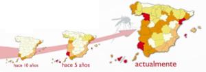 Evolución Dirofilariosis en España