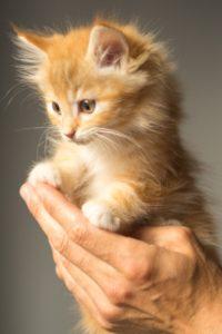 Primera consulta de gatito