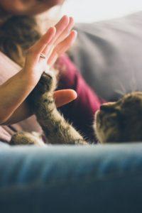 Cistitis idiopatica en gatos