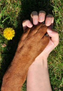 Picor en perros