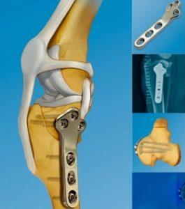Tecnica TPLO para cirugia de ligamento cruzado en perros